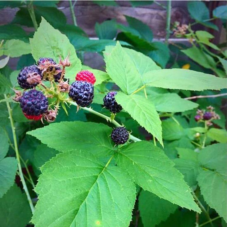 raspberry pic 1