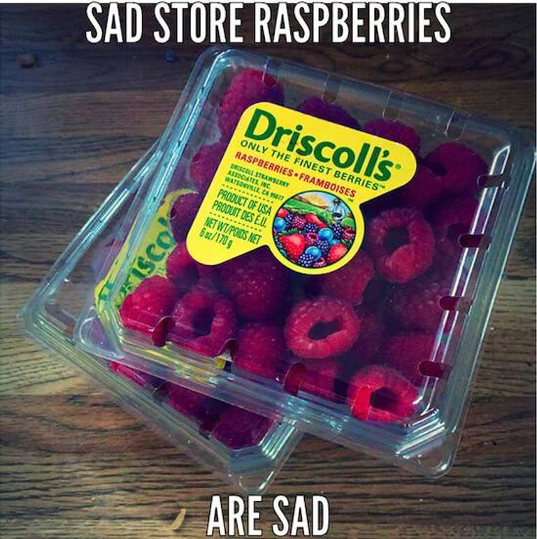 raspberry pic 2