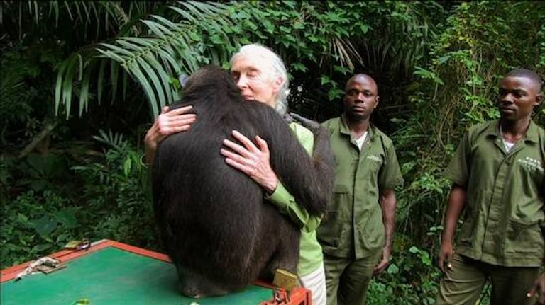 Dr Jane Goodall receives spontaneous embrace from Wounda