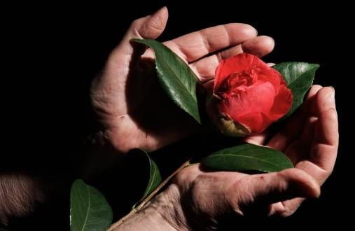 close up of hands cradling flower