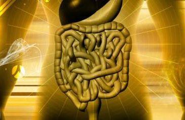 digital rendering of intestines