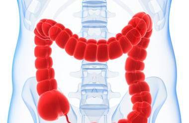 Illustration of colon