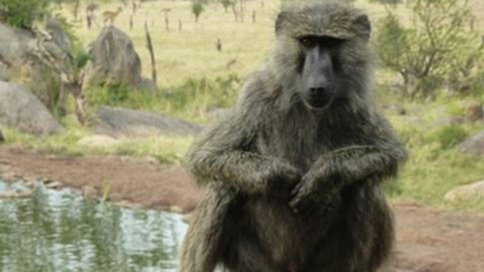 Visitor on my balcony at the Four Seasons Safari Lodge Serengeti