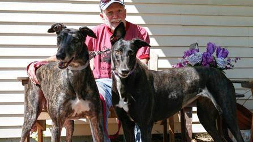 a pair of greyhounds