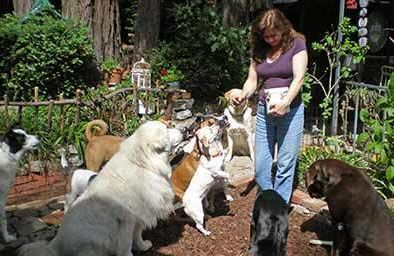Sandra Tjader of Dog Vacay