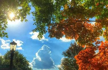 This fall foliage was shot by the author with his iPhone 6 Plus