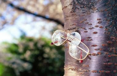 eyeglasses hanging on a tree