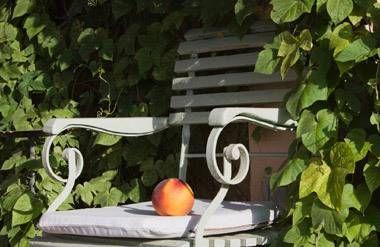 Peach sitting on chair in garden