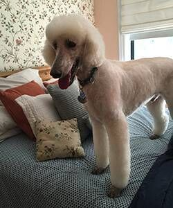 Jane Gross dog