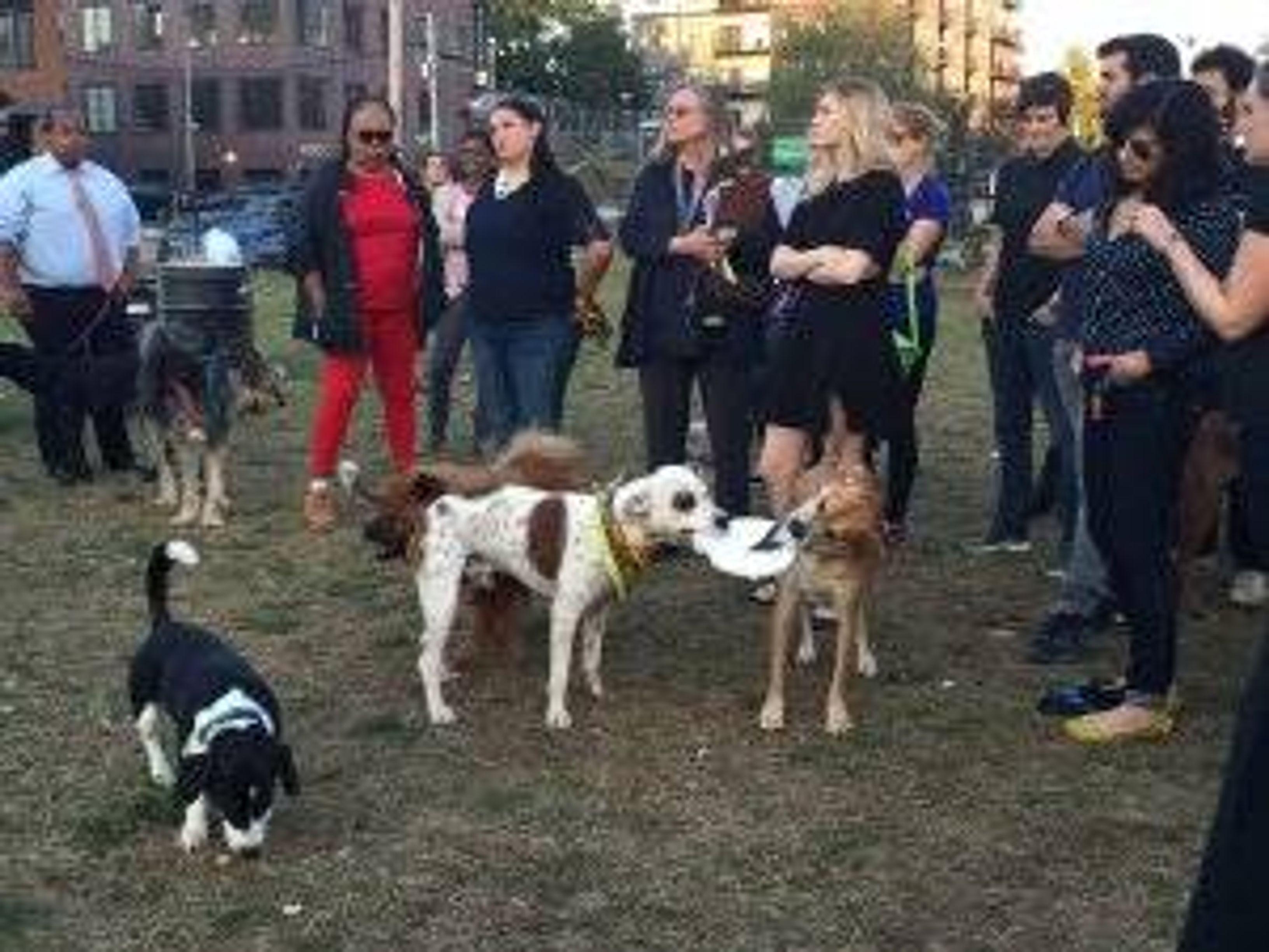 Visitors at the dog park