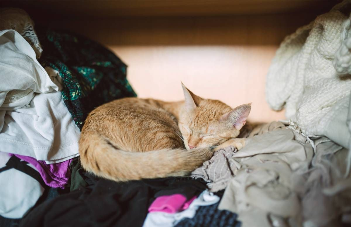 Cat sleeping in a closet on top of clothes