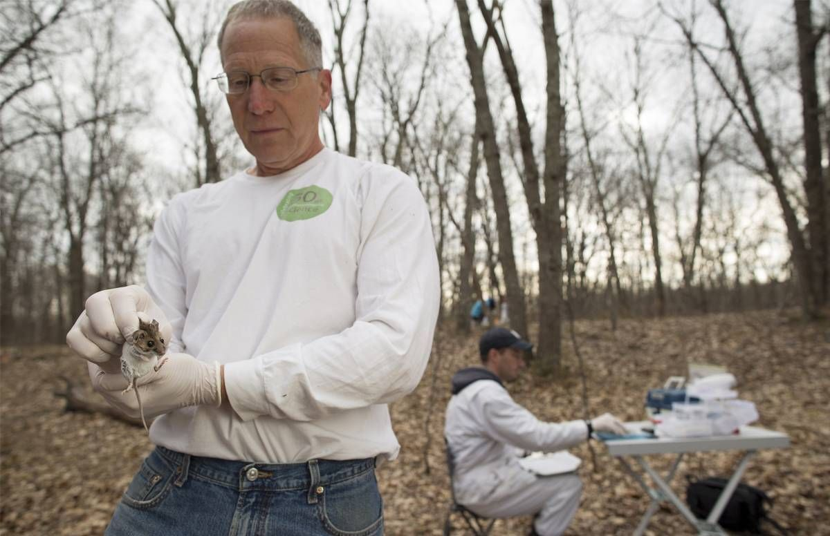 Rick Ostfiled holds a white-footed mouse, a key vector for ticks that spread Lyme disease