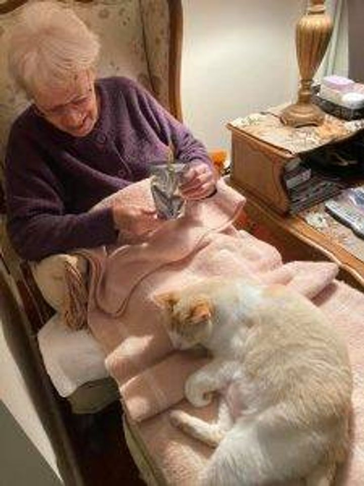 """From reader Adrienne B: """"Jack the therapy cat in grandma's lap."""""""