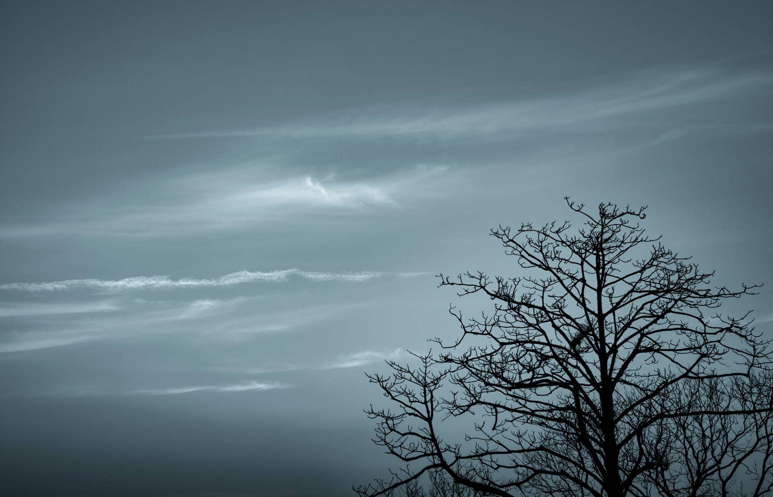Bare trees, winter sky, blue christmas