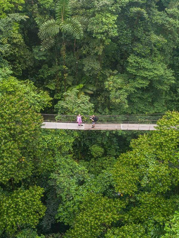 Hanging bridge over lush rainforest in Costa Rica, retire abroad