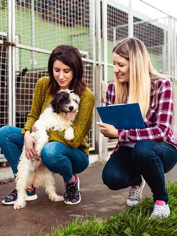 Pet adoption shelter, small business trends, Next Avenue