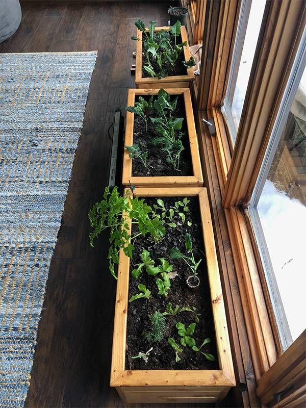 Indoor garden boxes with herbs, Next Avenue