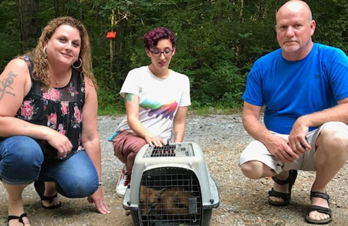 Three people squat next to an animal crate with a small red fox inside, loss, Next Avenue