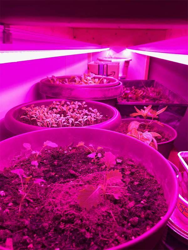 Indoor garden plants under heat lamps, Next Avenue