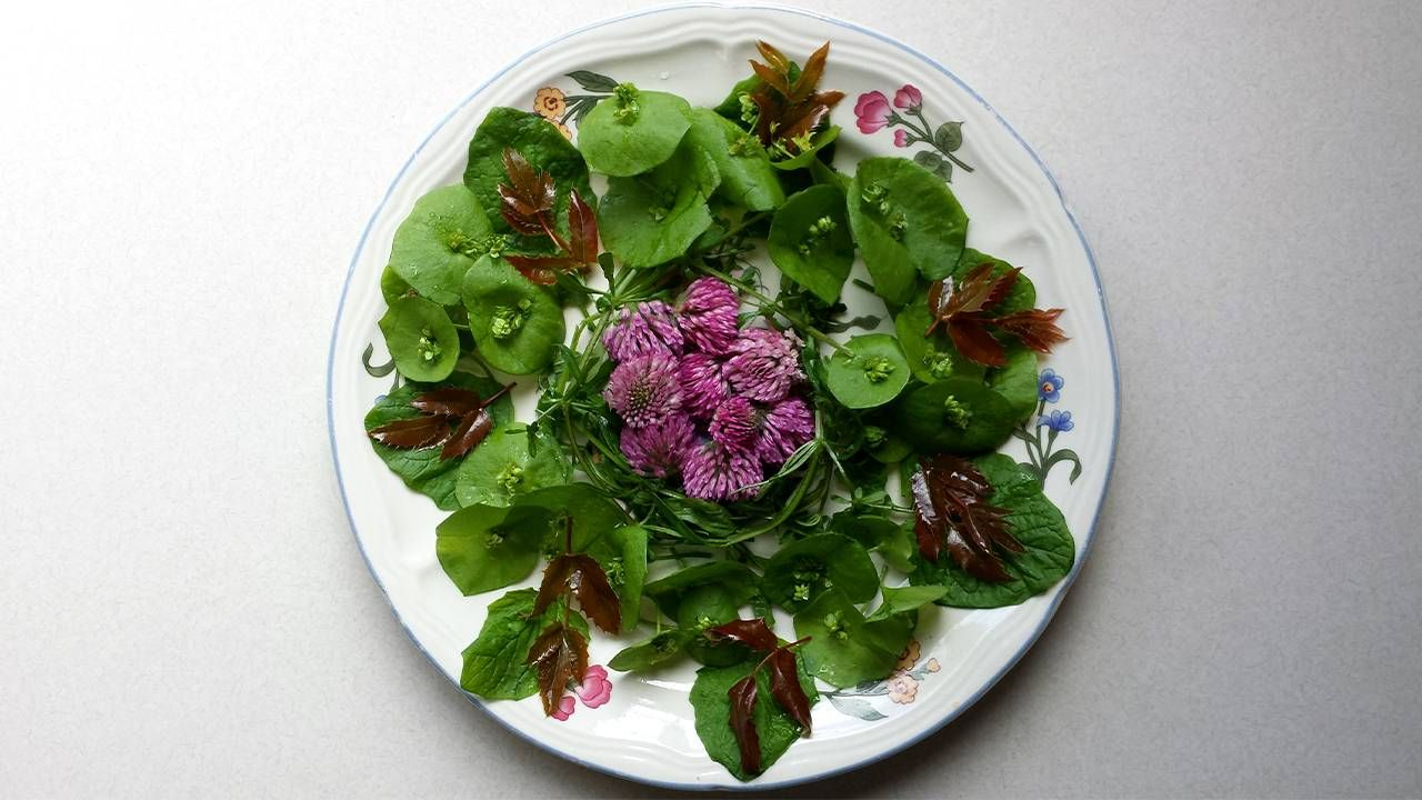 A colorful plate of greens and clover flowers. Foraging, forage, nature, Next Avenue