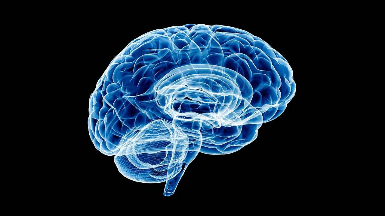 An Xray of a human brain. Sleep, research, brain age, dementia, Next Avenue