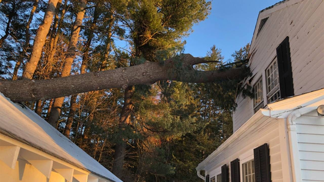 A tree fallen into the side of the author's house. pandemic, pivot, Next Avenue