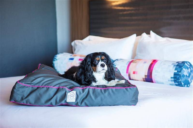 a dog in a bed, dogs, planes, and automobiles