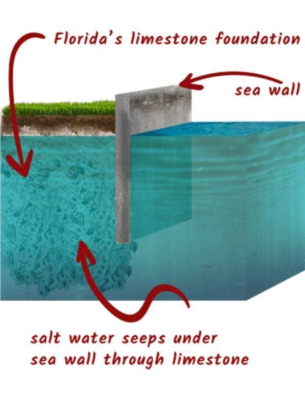 A graphic illustration of how water seeps under the sea wall through limestone in Florida. Next Avenue, Surfside, collapse, climate change
