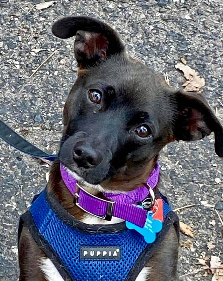 Reuben, traveling pandemic pup