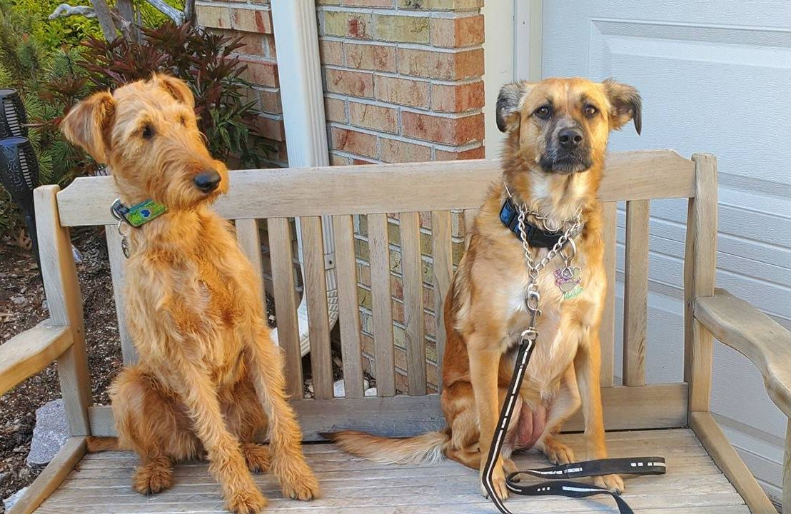 Two dogs sitting on a bench. Pets, dog owner help, Next Avenue