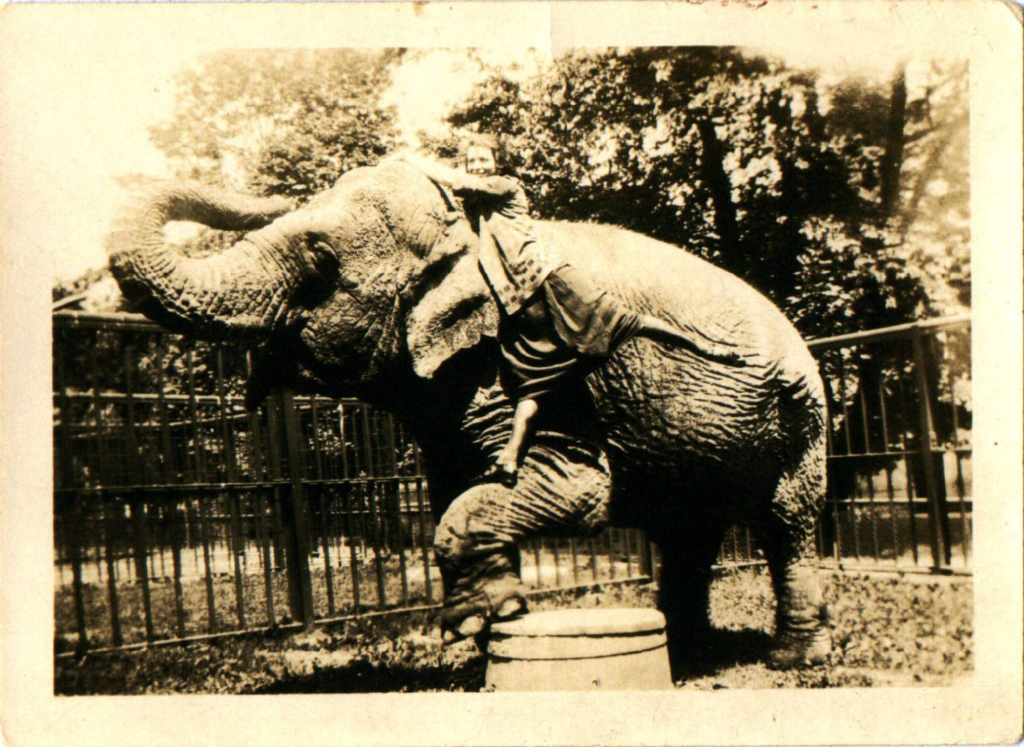 old photo of a circus elephant. Next Avenue, great-grandmother