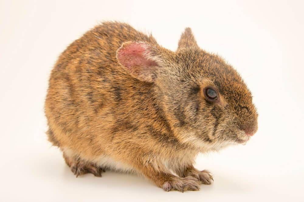 Endangered Animals pbs rewire