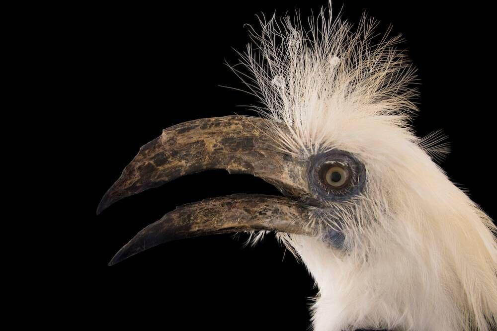 Credit must accompany image: Joel Sartore/ National Geographic Photo Ark