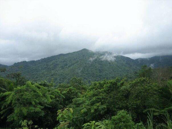 El Yunque National Forest Puerto Rico pbs rewire