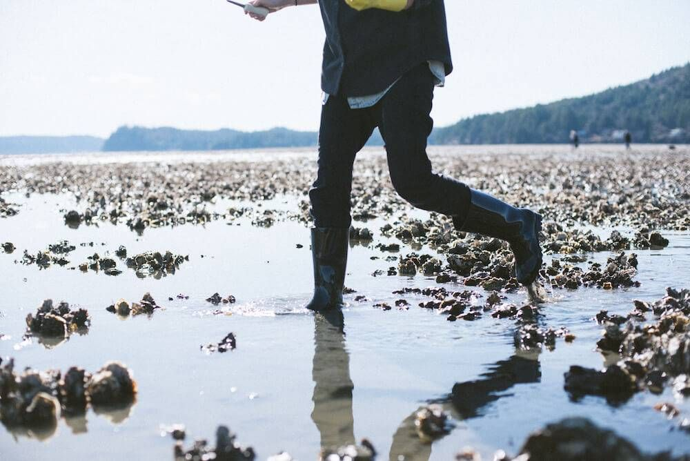 Photo of a person in rubber boots walking through an oyster bed. Rewire PBS Living Oysters