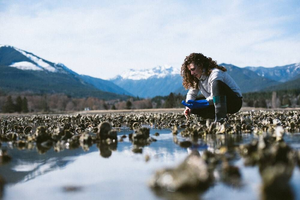 Photo of a woman with curly hair crouching in an oyster bed with the Olympic Mountains in the background. Rewire PBS Living Oysters
