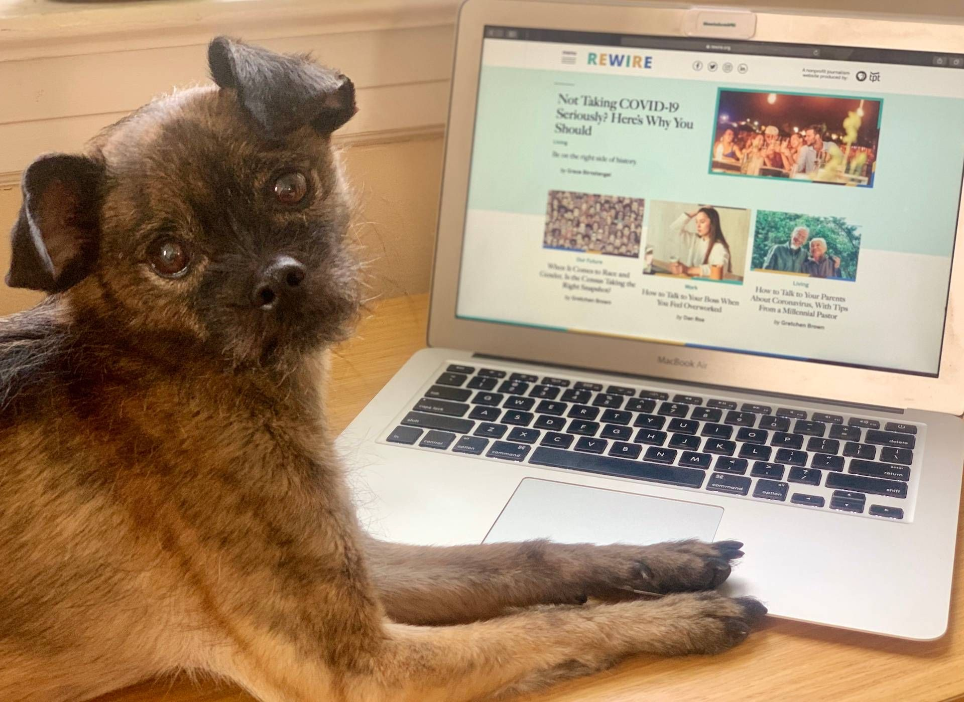 A cute dog at a laptop computer. Rewire PBS Living New Look